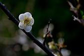 2014-01-12_清大梅園:IMG_2826.JPG