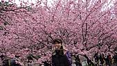 2011-02-20_武陵農場賞櫻行:吃花!花癡?