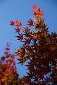 2014-11-25_福壽山賞楓:灰灰的藍天 + 灰灰的紅楓 (囧)
