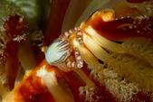 2015-05-16~17_小琉球之海龜看到膩:超強流的夜潛上岸前遇見的好朋友,只是牠到底是誰?@@
