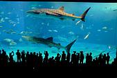 2016/1002~1004_沖繩 (X100S):我也是第一次看到鯨鯊!!