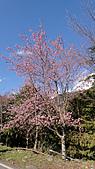 2011-02-20_武陵農場賞櫻行:藍天下的櫻吹雪