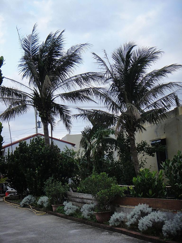 2010-10-27_我在墾丁*充實、平靜又驚險的第二天:南洋風情