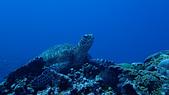 2017年11月,平常日的小琉球海底三日遊 (NO. 145~151):海龜