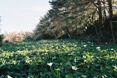 [Film 27] 2016年09~12月_新加坡 & 福壽山:20171204_福壽山農場