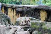 2013年02月_蛇年新春到處行:黏成一團的猴子家族