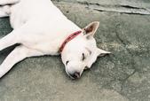 [Film 12] 2015年06月阿里山鄉:「十字路車站」的可愛狗狗。