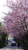 2011-02-20_武陵農場賞櫻行:往桃山的道路上