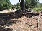 20090502 [台中]「大雪山森林遊樂區」之單人探險記:而且樹的根又長又粗@@