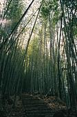 [Film 36] 日光 (日本)、瑞里 (嘉義)、南田 (台東):瑞里,綠色隧道