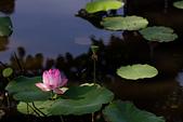 2014年07月的華山荷塘:IMG_7376.jpg