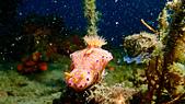 2017+2018年的東北角潛水記錄:P8190090.jpg