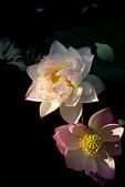 """2014年07月的華山荷塘:這個光實在太美了! 可是這個構圖實在太糟了~=_="""""""