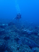 2017年11月,平常日的小琉球海底三日遊 (NO. 145~151):我拍海龜,教練拍我 :P