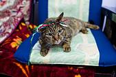 2014-02-03_(初四趴趴走) 鹿港(彰化) → 南港(南投):我記得拍完這張後,這隻貓就對我兇吼了一大聲...XD