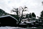 [Film 49] 藏王狐狸村、角館、大內宿 (2019冬):角館一隅