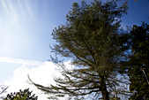 2013-03-22_阿里山森林遊樂區:IMG_7451.jpg