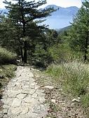 20090502 [台中]「大雪山森林遊樂區」之單人探險記:前往神木區