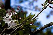 2013-03-22_阿里山森林遊樂區:IMG_7485.jpg