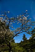 2013-03-22_阿里山森林遊樂區:IMG_7478.jpg