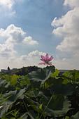 2014-07-19_觀音蓮花季:IMG_7723.jpg