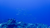 2017年11月,平常日的小琉球海底三日遊 (NO. 145~151):魚群