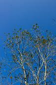 2014-02-02_ (初三趴趴走) 竹崎、左營、旗津:很棒的天氣,天空藍的不像話~^^