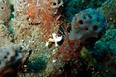 2015/04/30~05/03_土蘭奔潛水日記 @Bali:為了突顯娃娃魚到底有多小,這張是比例尺而已~XDDDD