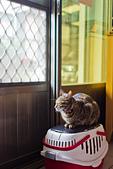2014-02-03_(初四趴趴走) 鹿港(彰化) → 南港(南投):初五的早上,等門等到睡著的貓~
