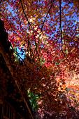 2014-11-25_福壽山賞楓:這張完全沒有後製,只有從RAW檔傳成JPEG,但這個五顏六色的光影好像是有點假了~XD