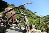 2012-10-15_南竿慢慢遊:任意的枯枝與漂流木,在石屋旁就很有意境