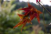 2014-09/28,29_武陵農場二日遊:青楓慢慢地紅了~