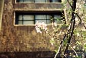 [Film 8] 2015年02 & 04月(霧台、北埔、曲冰、山腳、老梅):新竹玻工館的櫻花