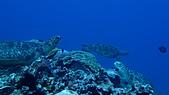2017年11月,平常日的小琉球海底三日遊 (NO. 145~151):疑似搶地盤失敗(?)
