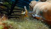 2017年11月,平常日的小琉球海底三日遊 (NO. 145~151):性感蝦