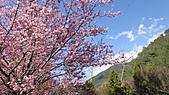 2011-02-20_武陵農場賞櫻行:櫻花吹雪