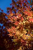 2014-11-25_福壽山賞楓:這個色調比上一張好多了!