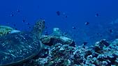 2017年11月,平常日的小琉球海底三日遊 (NO. 145~151):PB030283.jpg
