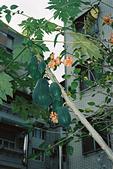 [Film 43] 2017/12~2018/02 的生活記錄:教堂的木瓜樹