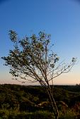 2013-08-04_淺水灣日出、福德水車公園、貝殼廟、三芝小豬:樹的角度好像反過來了@_@