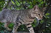 三月份隨拍:拍花時,突然跑出一隻小cat...不怕生哦~