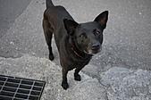 三月份隨拍:小黑狗也跑來湊熱鬧,呵呵
