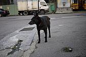 三月份隨拍:小黑狗也學cat...