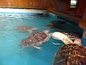 2010.07.25野柳海洋公園:IMG_1072.JPG
