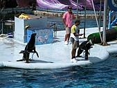 2010.07.25野柳海洋公園:IMG_0951.JPG