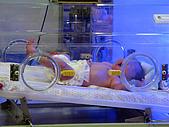 2008年10月15日小貝比出生:IMG_0015.JPG