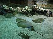 2010.07.25野柳海洋公園:IMG_1093.JPG