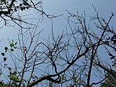 獅球嶺的微距照:IMG_1547.JPG