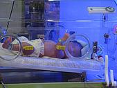 2008年10月15日小貝比出生:IMG_0016.JPG
