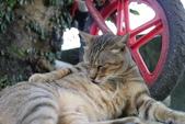 20120704猴桐拍cat: